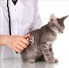 Ветеринарные клиники в Каменске